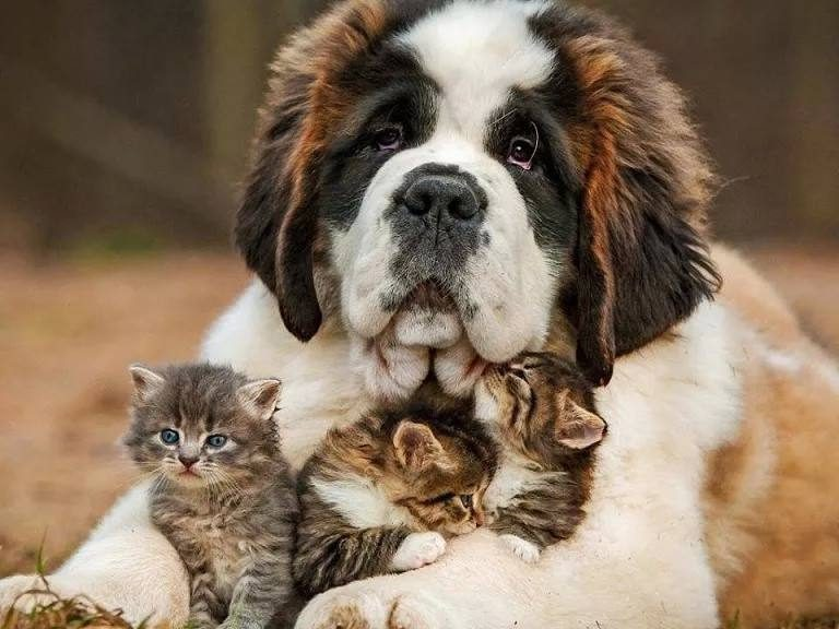Kittens with Dog
